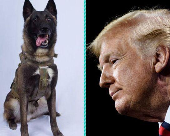 SOPITAS: El perro militar que se convirtió en un héroe