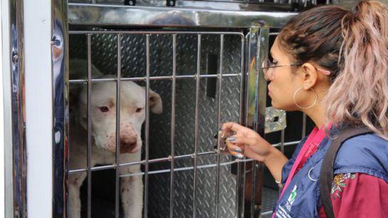 SOPITAS: Por primera vez dictan prisión por maltrato animal