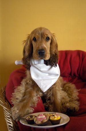 SOPITAS: Conoce la fórmula para calcular la edad humana de tu perro
