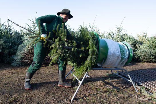 SOPITAS: ¡No tires a la basura tu árbol de navidad mejor recíclalo!