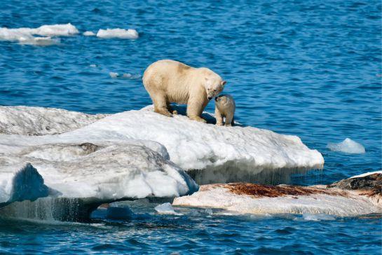 SOPITAS: La temperatura de los océanos en 2019, la más alta en la historia