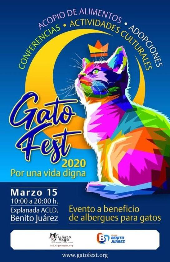 Gato Fest 2020