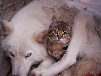 Encapuchados sacrifican a perros y gatos en edoMex
