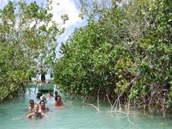 Pierde Rivera Maya 50% de manglares en cinco años