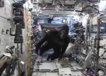 Scott Kelly celebra un año en el espacio disfrazándose de gorila