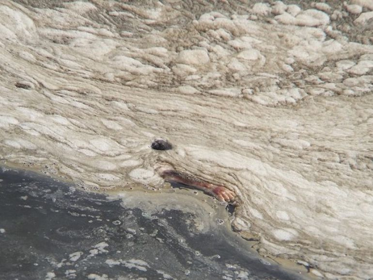 Encuentran brazo en una bahía de Brasil