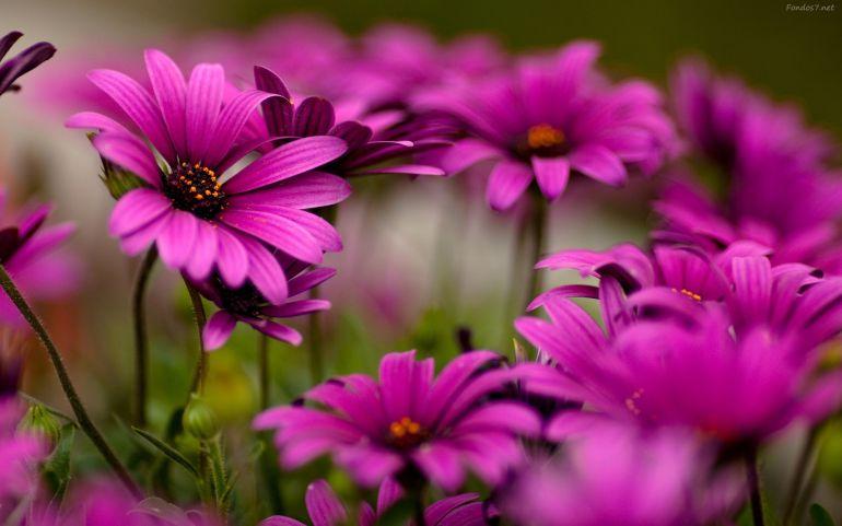 PlantNet: el shazam para plantas