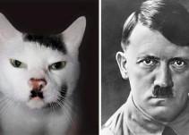 ¿Estos animales se parecen a los famosos o los famosos se parecen a estos animales?