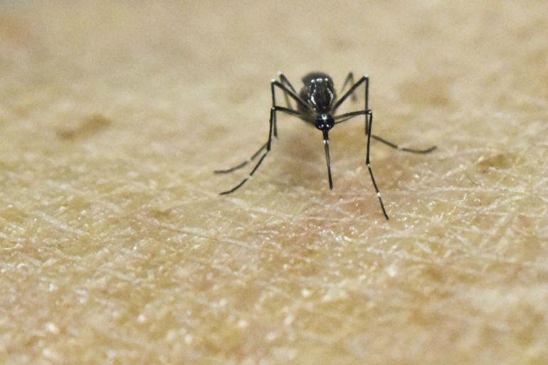 Se recomienda a embarazadas no viajar a Río de Janeiro por virus del Zika