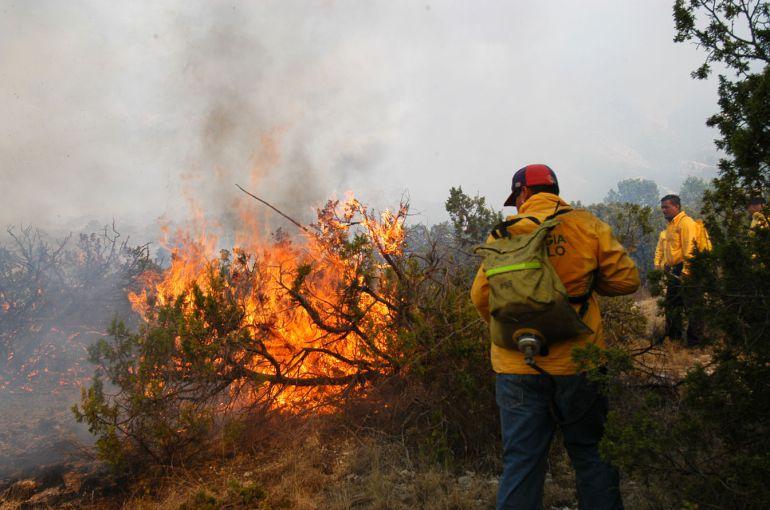 Incendios consumen alrededor de 50 hectáreas boscosas en Uruapan