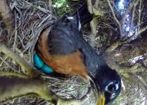 Graba un nido de pájaros y termina llevándose una sorpresa