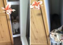 ¿Las mascotas pueden ver los pokémon? Estas fotos prueban que sí