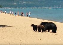 Familia de osos sorprende a vacacionistas en EE.UU.