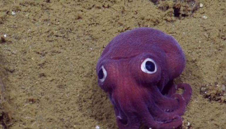 Encuentran al calamar más tierno del mundo