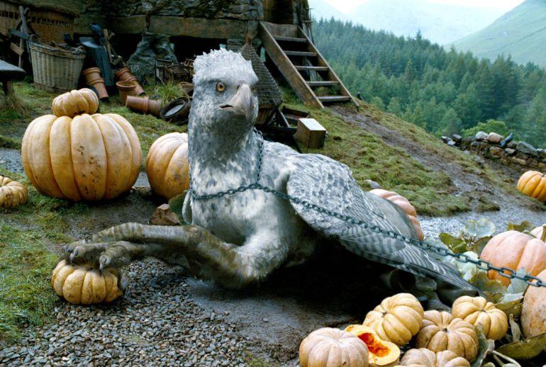 """Conoce al ave parecida a """"Buckbeak"""", el hipogrifo de Harry Potter"""