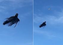 Un drone y un disfraz se han convertido en la mejor broma de Halloween