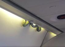 Descubren víbora en un avión que viajaba a la CDMX