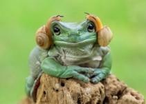 Fotógrafo retrata a las ranas como nunca antes habías visto