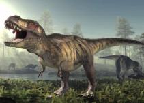 Encuentran cola de dinosaurio preservada y revela que no son como los imaginábamos