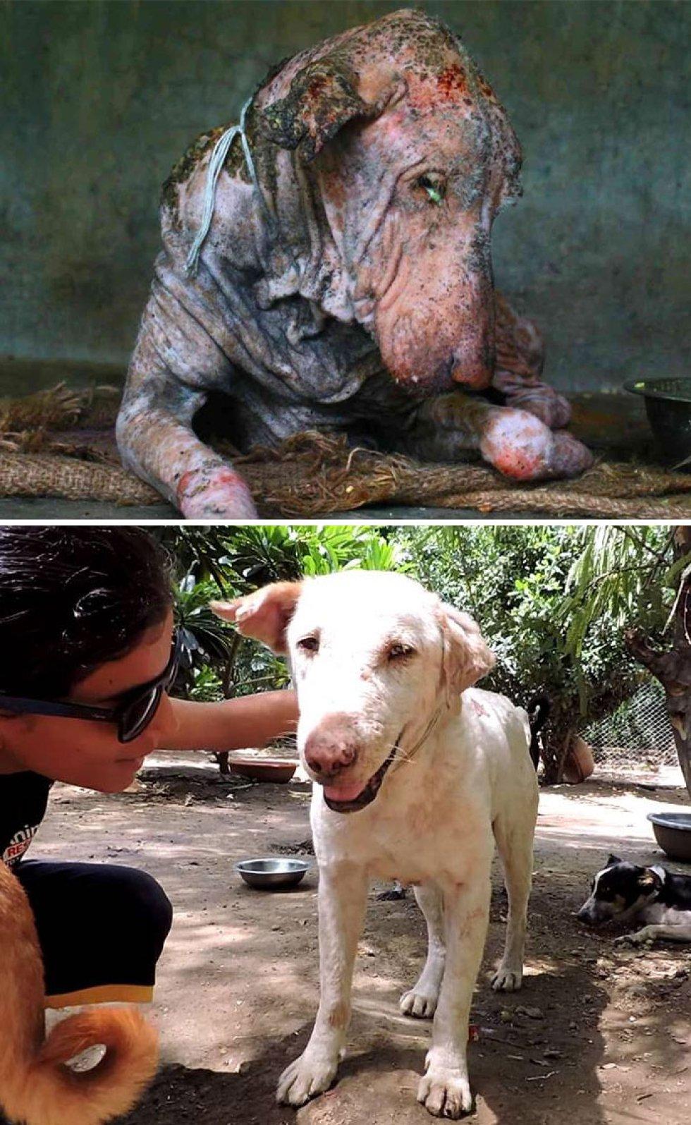 Fue rescatado de las calles y curado de la sarna. Así luce dos meses después