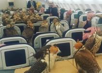 Un príncipe saudí compró los pasajes de avión para sus 80 halcones