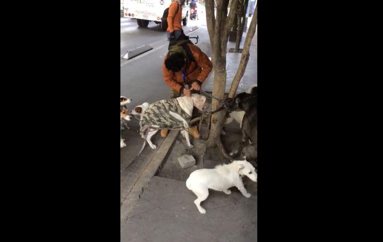 Cuidador golpea y maltrata a perros en la Condesa