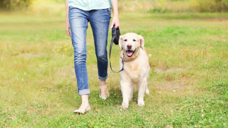 Normas básicas para educar a tu perro
