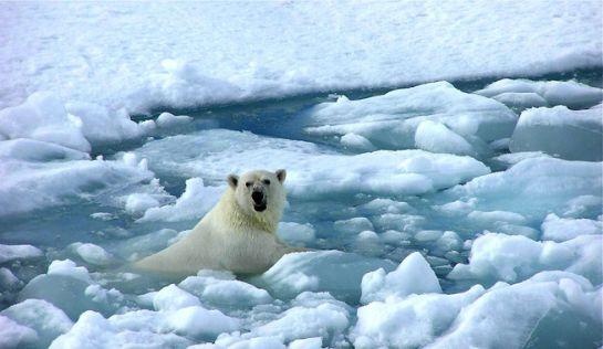 La Antártida registra temperaturas similares a las de El Cairo