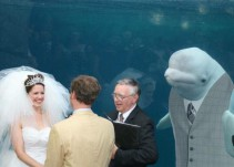 Se casan en un acuario pero no contaban con este invitado