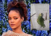 El loro que canta como Rihanna ha tenido un éxito impresionante