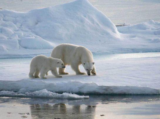 Viaja al Ártico sin salir de la CDMX