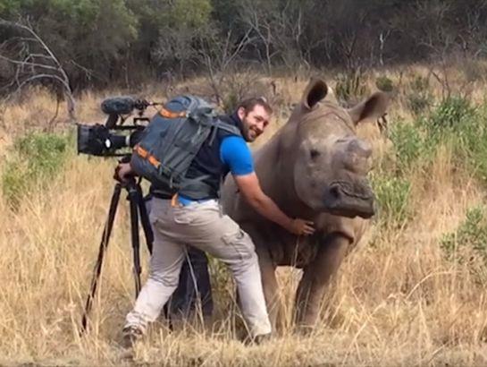 """Rinoceronte """"pide"""" un poco de amor a este camarógrafo"""
