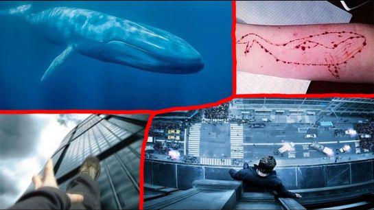 """Publican los pasos del reto suicida de """"la ballena azul"""""""