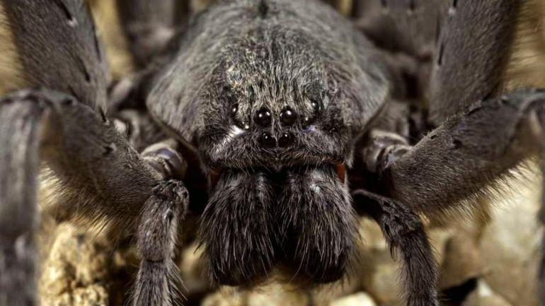 Descubren una nueva especie de araña en México