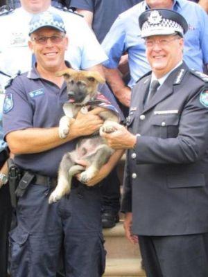 Despiden a perro policía por ser demasiado amigable