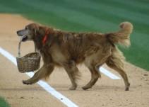 Perro reparte agua a jugadores de la MLB