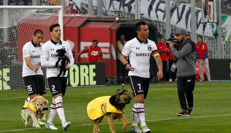 Jugadores del Colo Colo salen al campo con perros callejeros