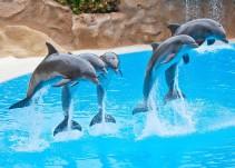 Prohíben la participación de delfines en espectáculos en la CDMX