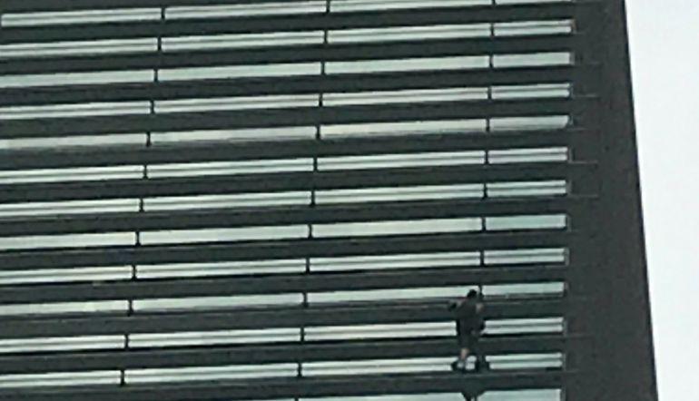 [VIDEO] Hombre escala edificio en Polanco sin protección