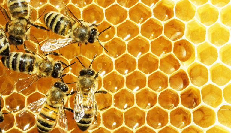 ¿Por qué ya no vemos tantas abejas como antes?