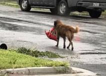 """Otis, el perro que escapó de """"Harvey"""" con todo y su bolsa de croquetas"""