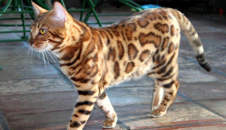 Suki, la gatita viajera y popular de Instagram