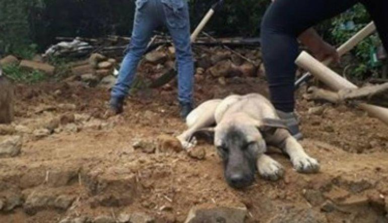 Jacinto, el perro que aún espera a su dueño sobre los escombros después del sismo