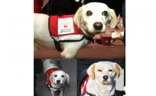 Hueso, de perro abandonado a héroe de la UNAM