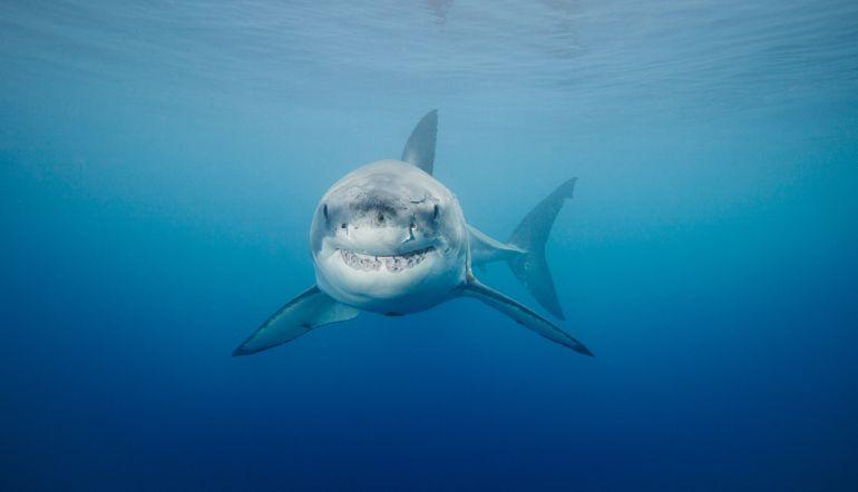 Facebook: [Video] Mujer cargó un tiburón para salvarle la vida a su mamá