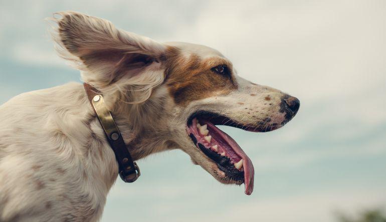 Italia: Le dieron licencia laboral para cuidar a su perro enfermo