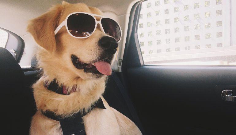 Google Photos: Esta app ya reconocerá y etiquetará a tu mascota