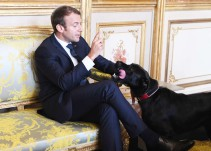 El perro de Emmanuel Macron se orinó en plena reunión