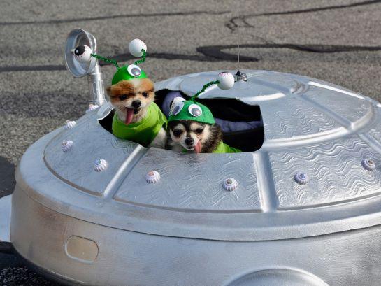 Los 10 mejores disfraces para mascotas