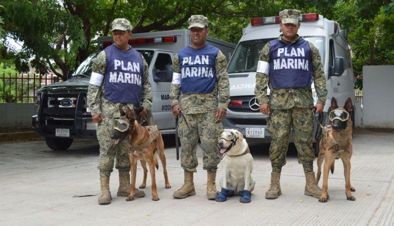 Frida y Eco, la pareja canina que enloquece las redes sociales
